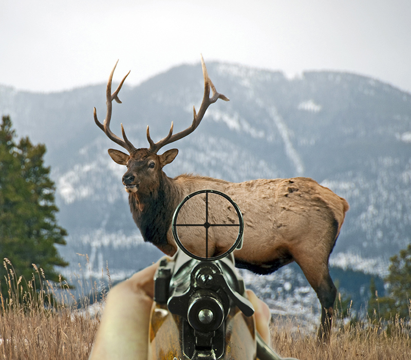 Outfitter Wildlife Management